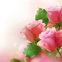 Pink Roses Puzzle
